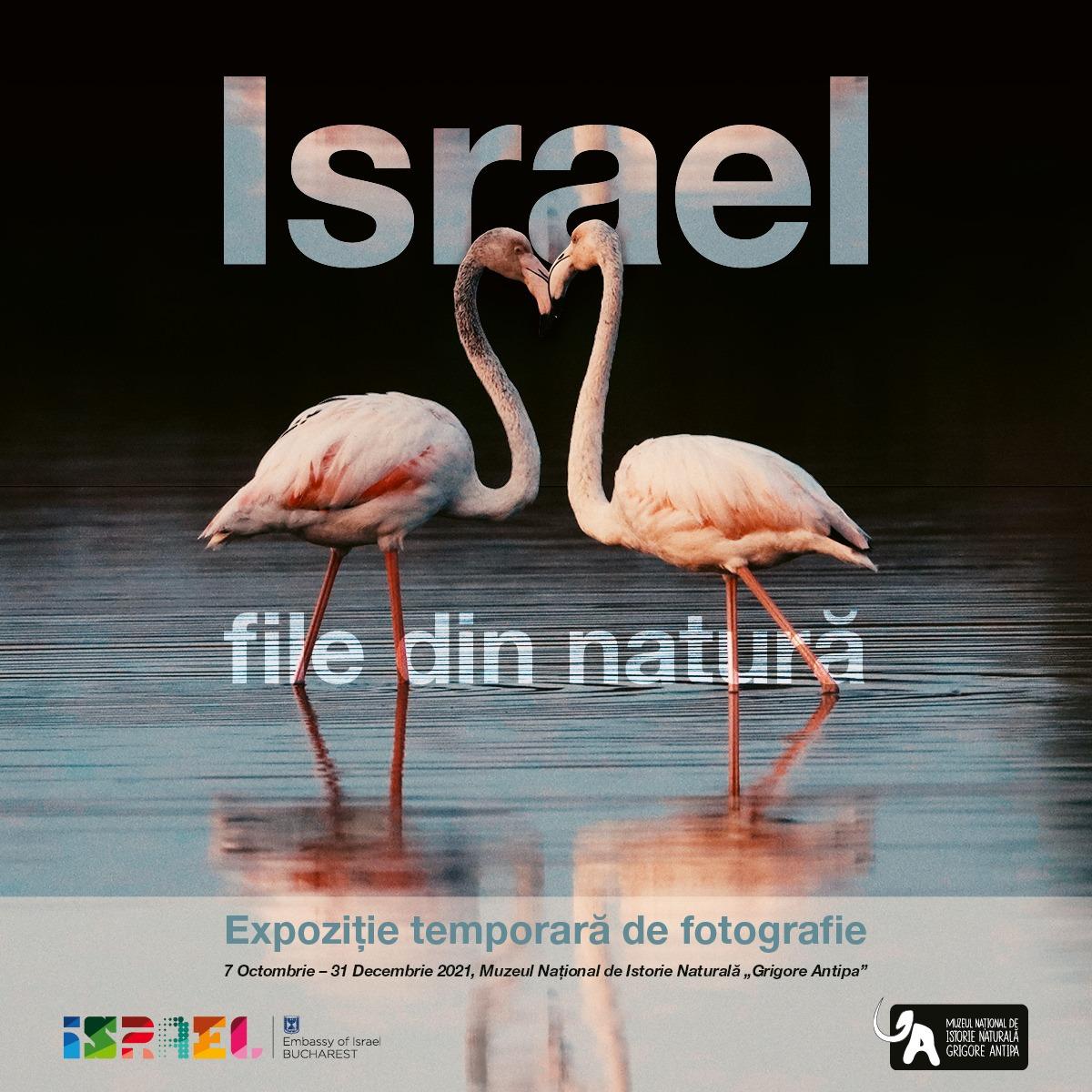 Israel-file din natura